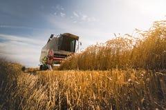 Ernten des Weizenfeldes mit Mähdrescher lizenzfreie stockbilder