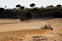 Ernten des Weizens stockfoto