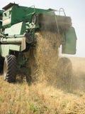 Ernten des Weizens Stockfotos