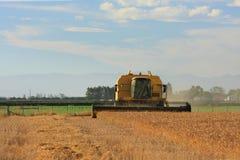 Ernten des Weizens auf den Canterbury-Ebenen Stockfoto