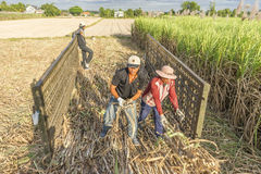 Ernten des Zuckerrohrfeldes, Tay Ninh-Provinz, Vietnam lizenzfreie stockfotografie