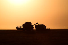 Ernten durch Mähdrescher bei Sonnenuntergang Lizenzfreie Stockfotos