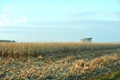 Ernten eines großen Feldes von Mais im Herbst Lizenzfreie Stockfotografie