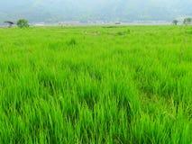 Ernten im Ackerland Stockbild