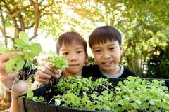 Ernten mit der Hand der Grünpflanze stockfotografie
