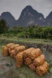 Ernten Sie die Orangen, die in Taschen ein Obstgarten nahe den Bergen verpackt werden Lizenzfreies Stockbild