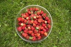 Ernten Sie die reifen, köstlichen Erdbeeren, in einer Schale Stockfotografie