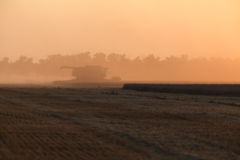 Ernten am Sonnenuntergang Stockfoto