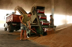 Ernten in Ukraine Lizenzfreies Stockbild