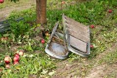 Ernten von Äpfeln in einem Fruchtgarten Die gefallenen Äpfel und die Treppe Rustikale Art, selektiver Fokus Lizenzfreies Stockfoto