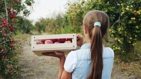 Ernten von Äpfeln im Obstgarten stock footage
