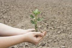 Ernten, zum der globalen Erwärmung zu verringern Lizenzfreies Stockfoto