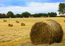 Erntezeit - holend in den Mais und in das Heu Stockbild