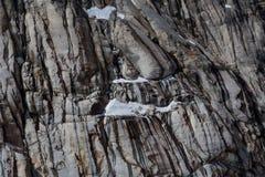 Eroded在多片灰色树荫下崩裂了花岗岩峭壁 图库摄影