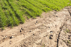 Eroded field. Detail of erosion in a crops field stock images
