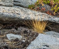 Eroded granite outcrop. An eroded granite outcrop creates little sculptures in Sequoia National Park in California royalty free stock images