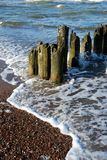 Eroded poles in the sea Stock Images