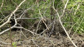 Eroded river bank tangle tree branches roots stock photos