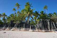 Eroded rock formation on beach with coconut trees Royalty Free Stock Photos