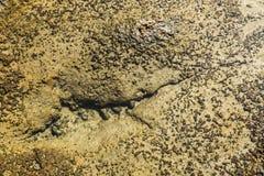 Eroded rocks underwater Royalty Free Stock Photo