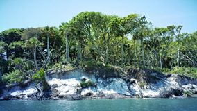 Eroded Shoreline. In N.E. Florida Royalty Free Stock Images