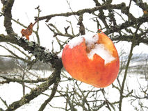 Eroded snowy apple Stock Photo