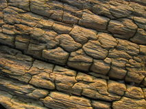 Eroded wood. Close up detail of an old eroded piece of wood on a beach Stock Photos