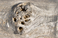 Eroded wood Royalty Free Stock Images
