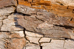 Eroded wood Royalty Free Stock Image