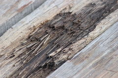 Eroded Wood Royalty Free Stock Photo