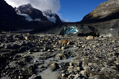 Eroderat landskap Columbia Icefield Arkivfoton