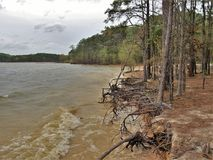 Eroding Shore at Jordan Lake. Waves have washed away some of the shore leaving tree roots exposed at Jordan Lake State Recreation Area, a North Carolina state Royalty Free Stock Photo