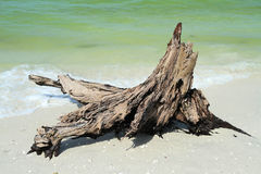 Eroding tree trunk on the beach Royalty Free Stock Photos