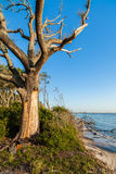 Erosão de praia Fotos de Stock
