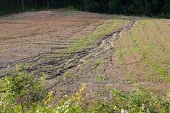 Erosão do solo em um campo cultivado após o chuveiro pesado imagem de stock