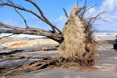Erosão na praia Foto de Stock Royalty Free