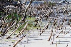 Erosión de playa costera Imágenes de archivo libres de regalías