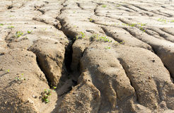 Erosión de suelo a llevar del pastoreo excesivo Imagen de archivo