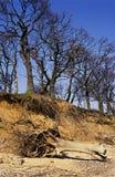 Erosie op het Eiland van Mersey, Essex Royalty-vrije Stock Foto