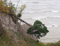 Erosion. Fallen pine tree due to bank erosion along Lake Erie shoreline stock images