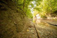 Erosion along the bank of the creek. Erosion along the bank of Four Mile creek. Northwestern Pennsylvania. Sunny summer day, some shadows stock photos