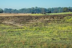 Erosion causing problems in a hayfield.. Summer erosion at work in north Mississippi agricultural hayfield. Land terracing would be a big help for this problem Royalty Free Stock Images