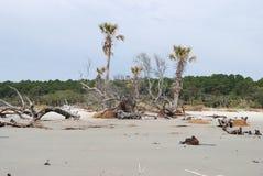 Erosion dödade träd på jaktön, SC USA Arkivbilder