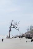 Erosion dödade träd på jaktön, SC USA Arkivfoto