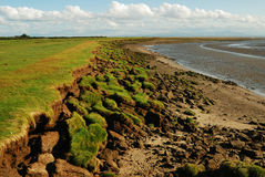 Erosion of shoreline, Solway Coast. Marked erosion and denudation of the shoreline of the Solway Coast, Dumfriesshire, Scotland with large clumps of land Royalty Free Stock Photos