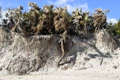 Erosione costiera di Vilano dall'uragano Immagini Stock