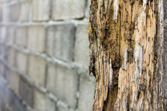 Erosione delle termiti immagini stock
