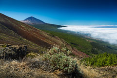 Erosione in Tenerife Immagine Stock Libera da Diritti