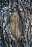 erotisk skog Arkivfoto