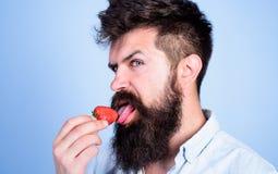 Erotiskt begrepp Det är hur smaksommar Man som slickar det söta bäret Man den stiliga sexiga hipsteren med långt slicka för skägg royaltyfri fotografi